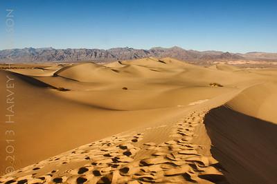 Mesquite Dunes, Late PM.