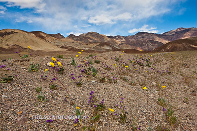 Death Valley-3347