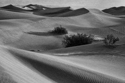 No Color Dunes