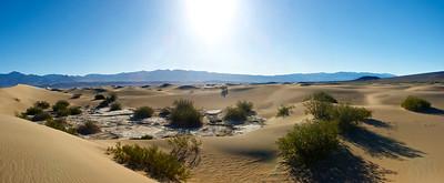 Vegetation in Death Valley