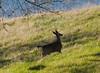 deer9099