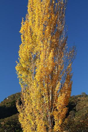 Del Valle fall colors Nov 3rd, 2013