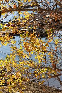 Del Valle morning Nov 3rd 58 of 59