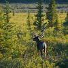 Denali Favorites : Selected pics from trip to Denali National Park