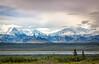 Looking Across The River Toward THe Alaska Range