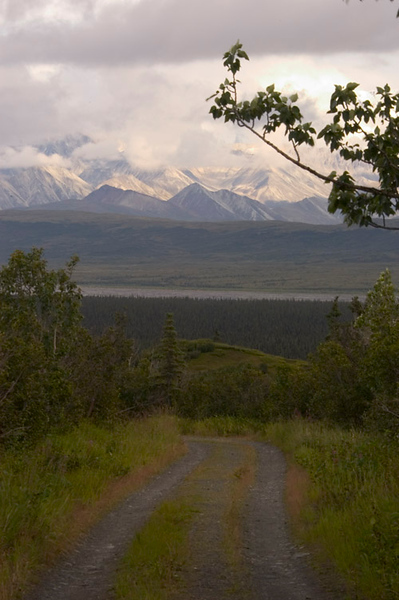 The Alaska Range peaks through briefly between rain showers. This photo was taken from a utility road near Wonder Lake.