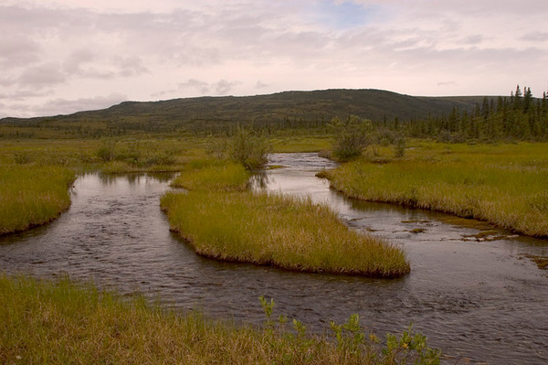 One of many small streams that weave through the marshy wetlands between Wonder Lake and the McKinley River.