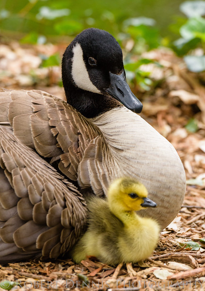 Proud mama, Descanso Gardens