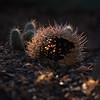 empty cactus