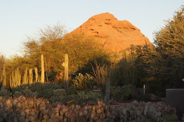 Desert Botanical Garden March 2015