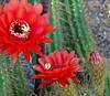 Desert Botanical Gardens, Phoenix AZ 2007
