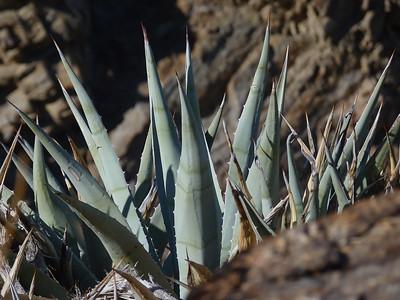 Desert Plantscapes