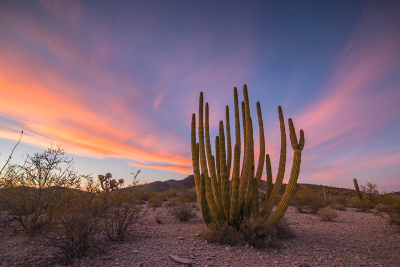 Organ Pipe Sunset