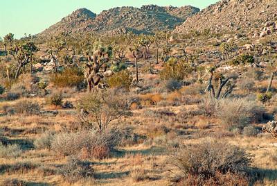 The desert of Joshua Tree National Park