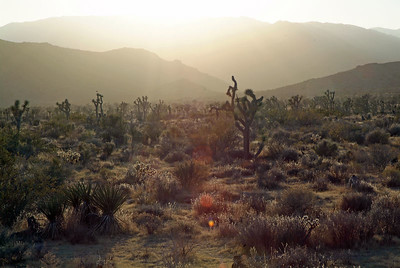 Joshua Tree National Park at sundown