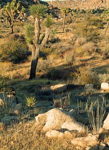 Desert of southern California