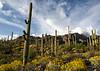 arizona country-1279