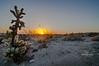 cactus sunrise L-0933