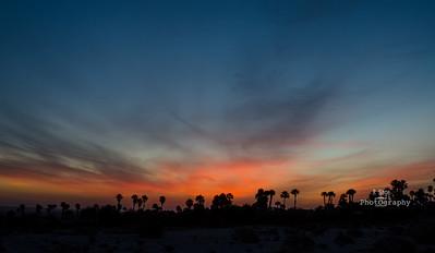 Desert Skys