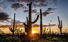 saguaro heaven-0421