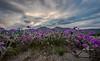 Borrego super bloom 2-8441