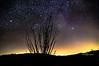 ocatillo stars-2037
