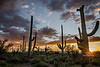 saguaro eve-0442