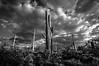 desert skys b&w-0324