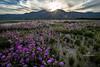 Borrego super bloom 4-8369