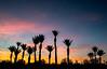 palm tree sunrise-8978