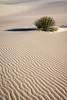 white sands-7640