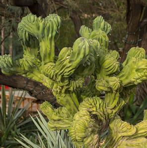 Botanical Gardens, Phoenix