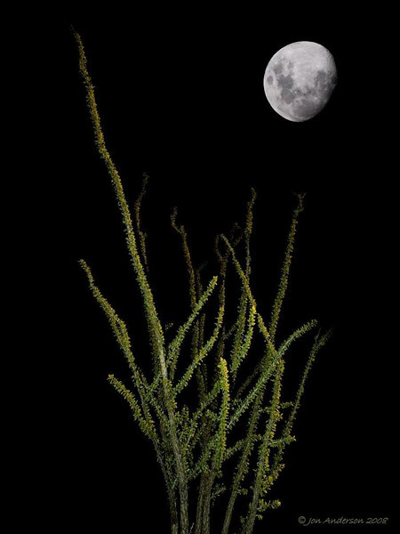 Ocotillo Moon