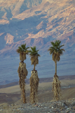 """Three proud palms  """