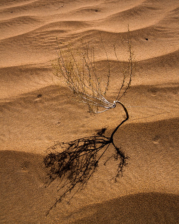 Sand Loners