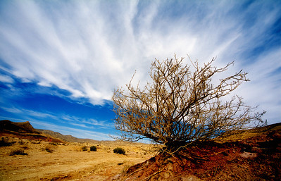 A lonely bush in the great crater area, Negev desert, Israel.