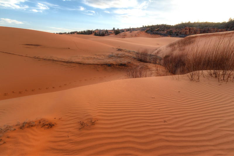 Coral Pink Sand dunes 09