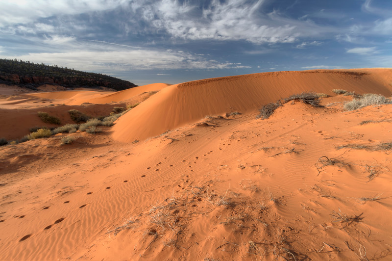 Coral Pink Sand dunes 11