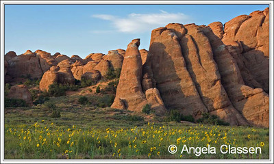 Flowers and Fins, Arches National Park, Utah