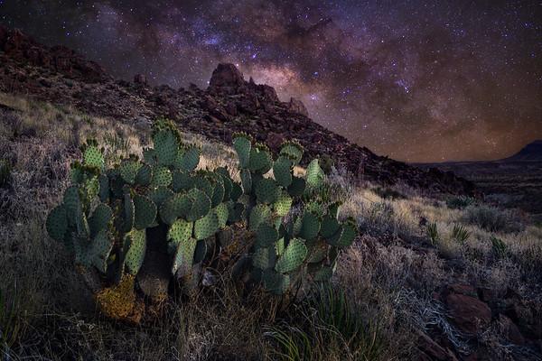 Desert Solitude - Big Bend