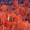 Light on Hoodoos,<br /> Bryce National Park, UT
