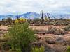 Gold Canyon, Arizona 3