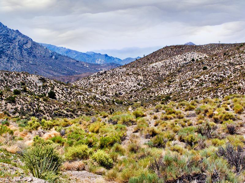 Sage & Rolling Hills in the Nevada Desert