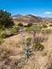New Mexico Desert Hills 4