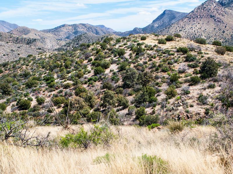 New Mexico Desert Hills 2