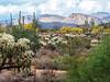 Gold Canyon Arizona 2