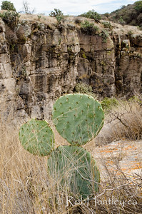 Lone prickly pear cactus at the canyon's edge.