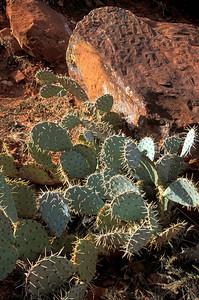 Prickly Pears, Sedona Arizona