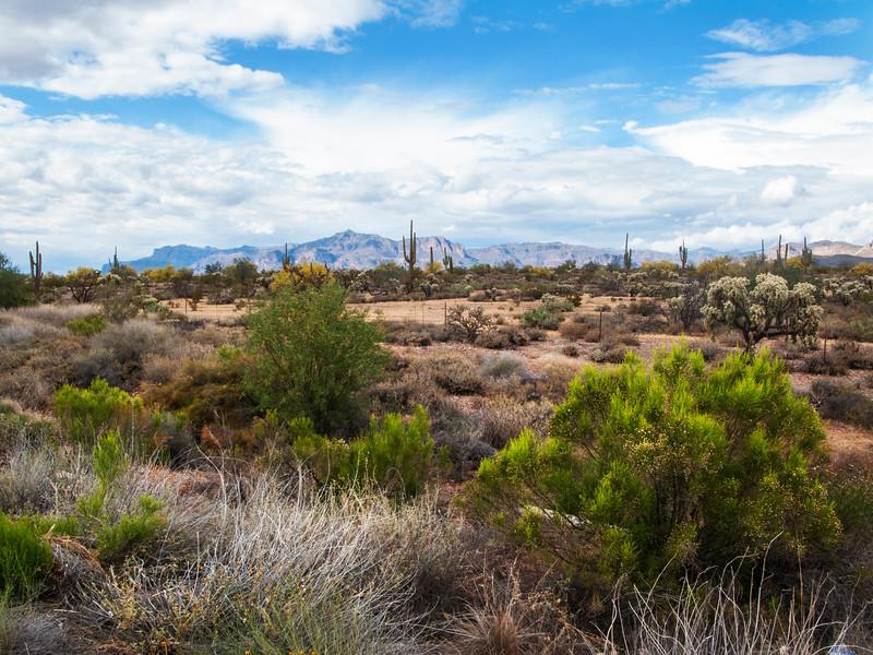 Gold Canyon Arizona 1