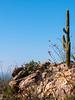 Lone Cactus, Arizona